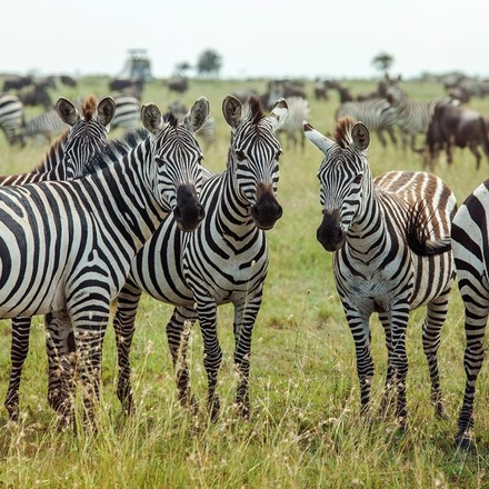 Southern Africa Encompassed: Bush Camps & Wildlife Spotting