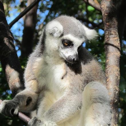Madagascar - Secrets of Madagascar