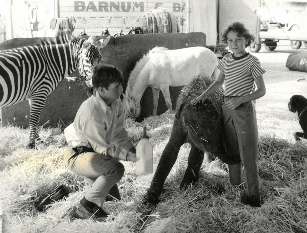 Diana Rhodin med elefantkalv hos cirkusen Ringling Bros. and Barnum & Bailey i USA 1968. Foto: Trolle Rhodin.