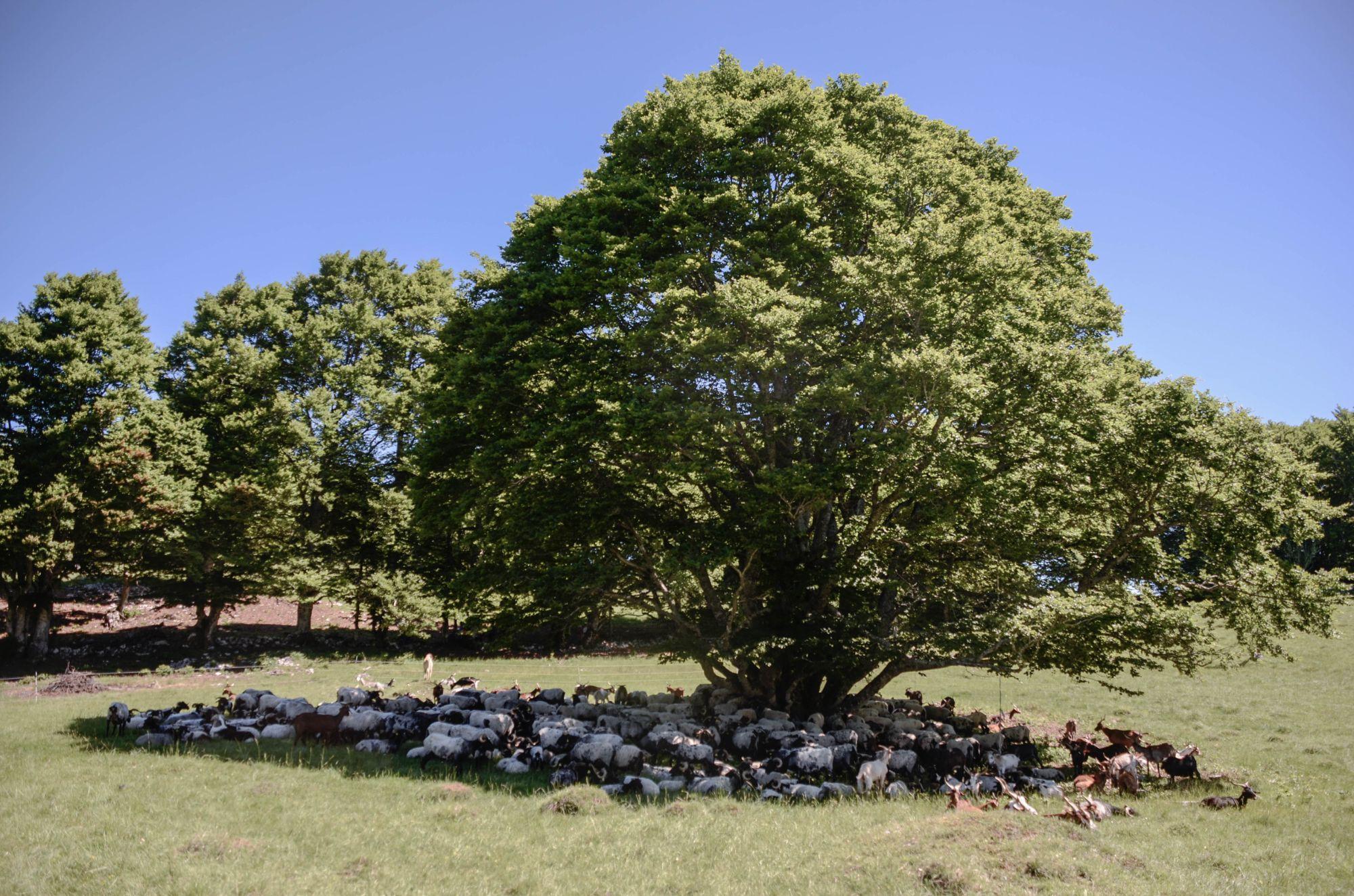 Représentation de la formation : Analyser une opportunité foncière : cas d'une terre nue