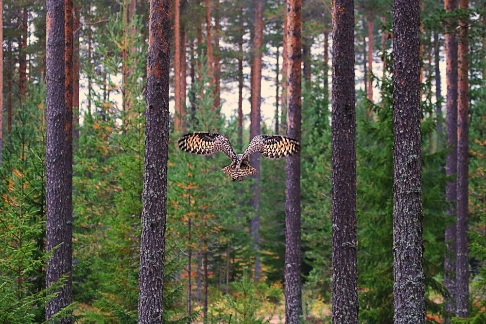 Foto: Johanna Berglund, Orsa Rovdjurspark
