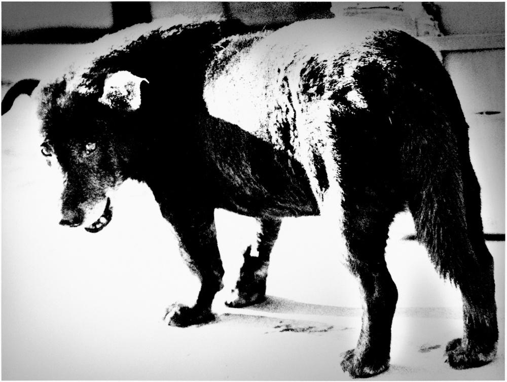 Stray dog © Daido Moriyama Photo Foundation