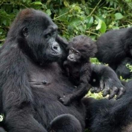 15-Days Soul of Uganda Adventure - Luxury Safari