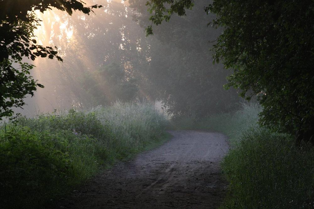 Skogsväg i morgonsol. Foto: Mostphotos