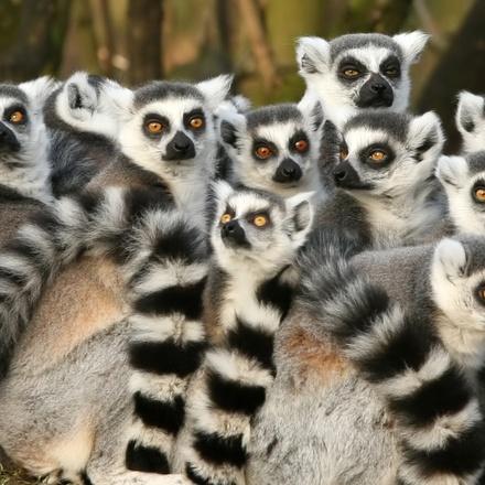 Madagascar Adventure