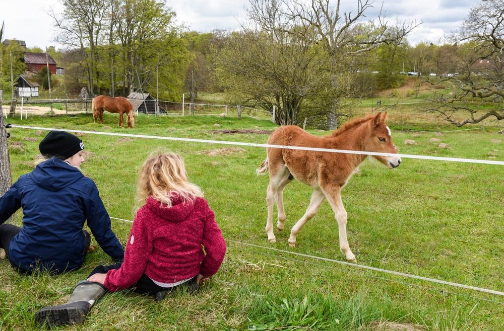 Hästar på Kulturens Östarp. Foto: Viveca Ohlsson/Kulturen