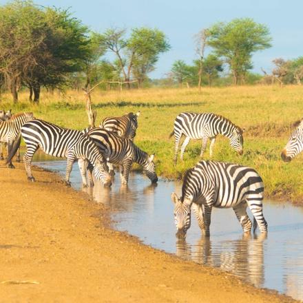 4 Days Tanzania Lodge Safaris