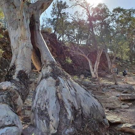 Walk the Flinders Ranges