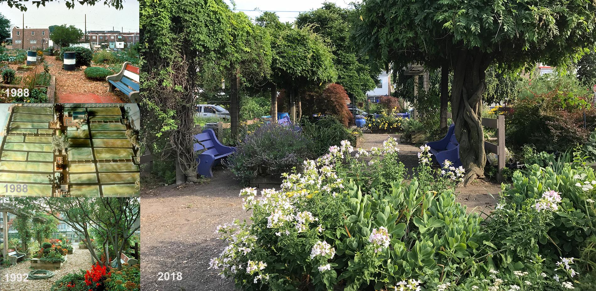 Designing a Framework for Action: Aspen Farms Community Garden (1988-Present)