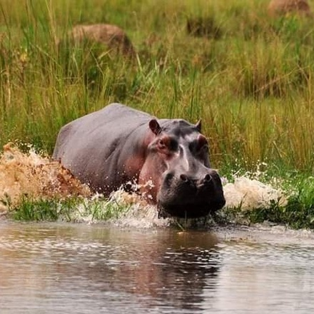 2 Days Safari To Queen Elizabeth Game Park with Ground Transportation from Kampala
