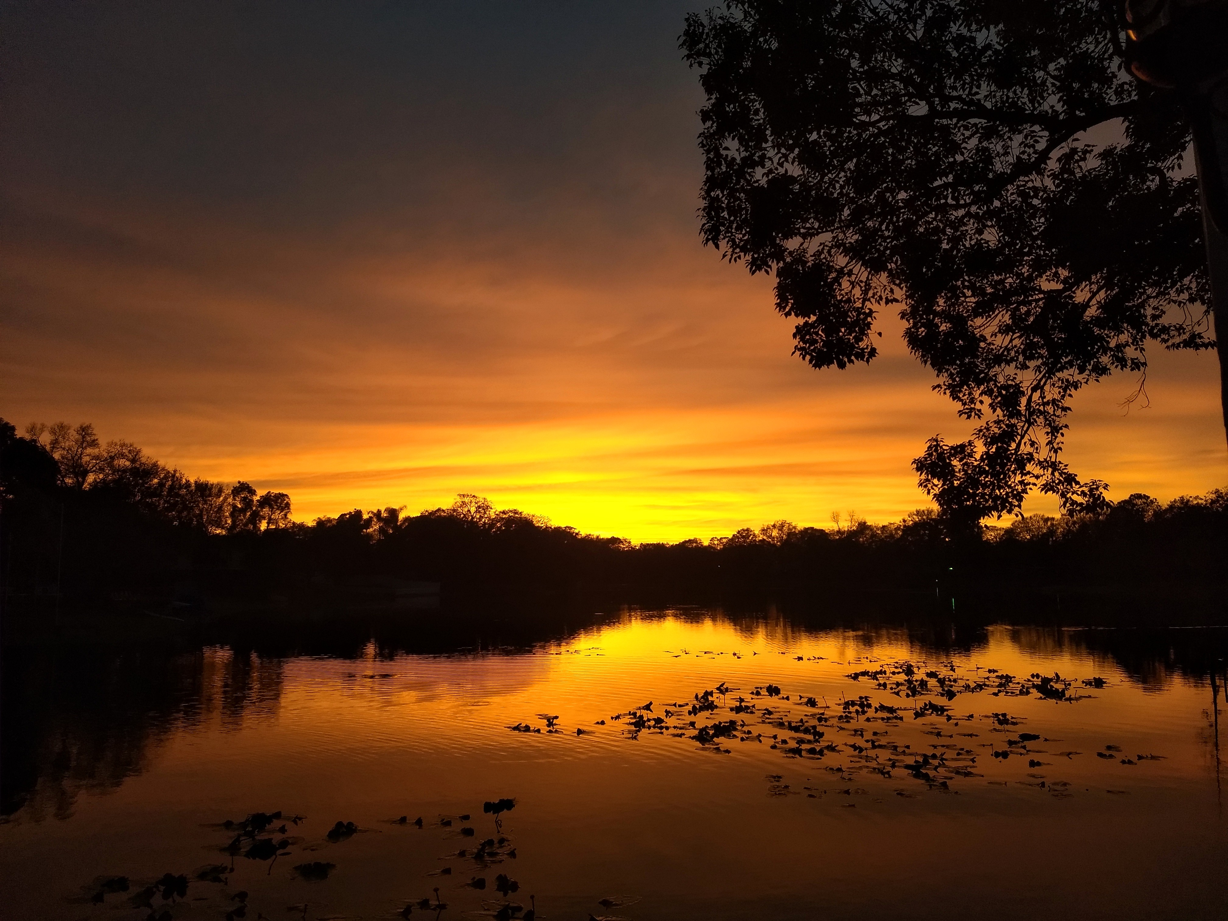 Sunset view from our backyard in Carrollwood, Tampa.