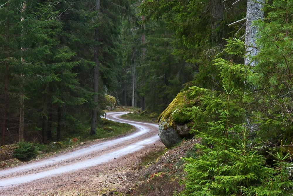 Slingrande skogsväg. Foto: Mostphotos
