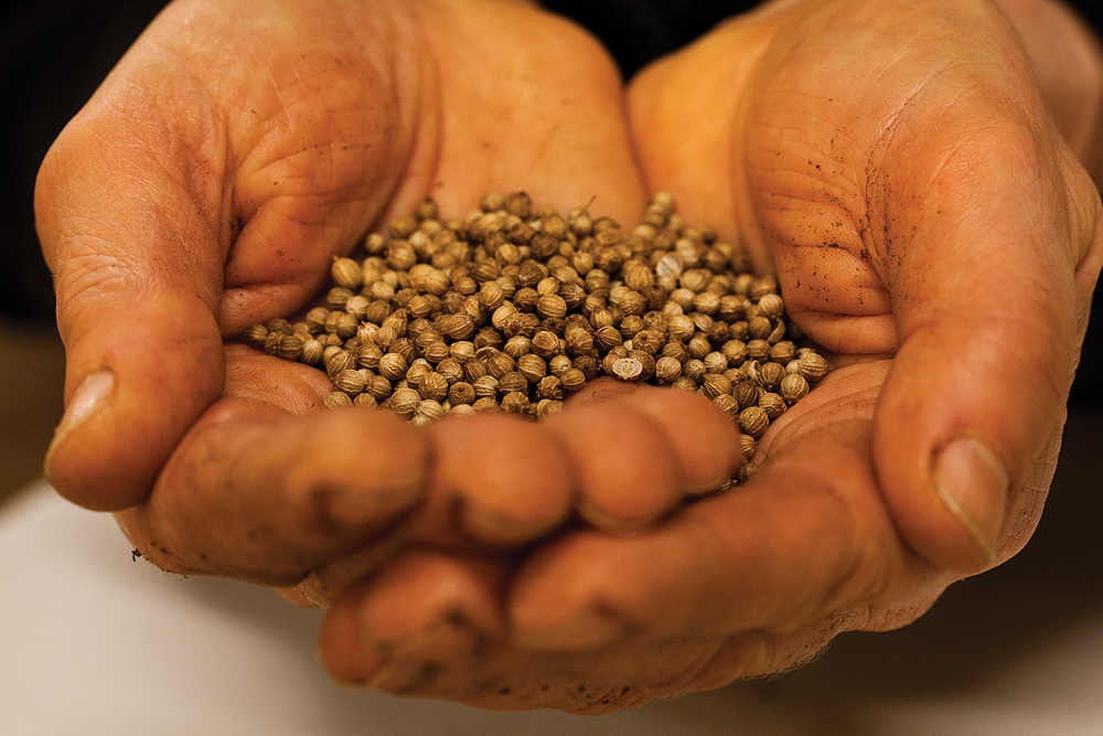 Vi odlar aromatiska örter och sallater, fullmatade med smak, karaktär och miljöomtanke. Vi sår cirka 200 000 krukor i veckan på en odlingsyta om 15 000 m2. Det är många krukor, men fortfarande är det den hantverksmässiga omsorgen om det spirande gröna livet som styr hela verksamheten. Orto Novo odlar ett femtiotal produkter i sina högteknologiska anläggningar.