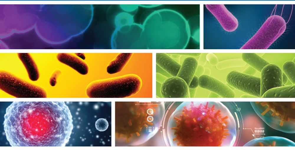 Multiple images of microbial life.