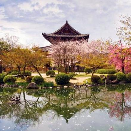 Cherry Blossom Festival - 13 days