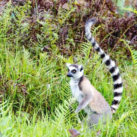 Discover Analamazaotra Park and Ankanin'ny Nofy