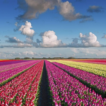 Best of the Netherlands - 2022
