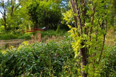 Victoriaville adhère au Fonds des municipalités pour la biodiversité