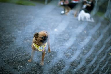 Réouverture des parcs canins à Victoriaville dès le 25 mai