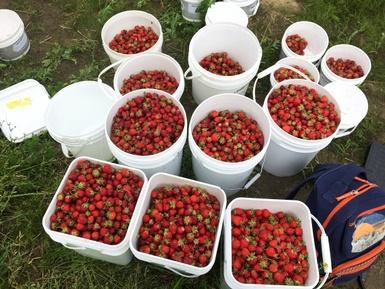 Artha-Récolte: déjà une tonne de petits fruits sauvés!