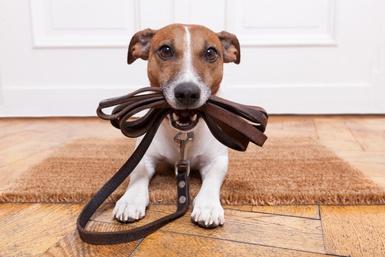 Présence accrue pour que les chiens soient en laisse dans les lieux publics