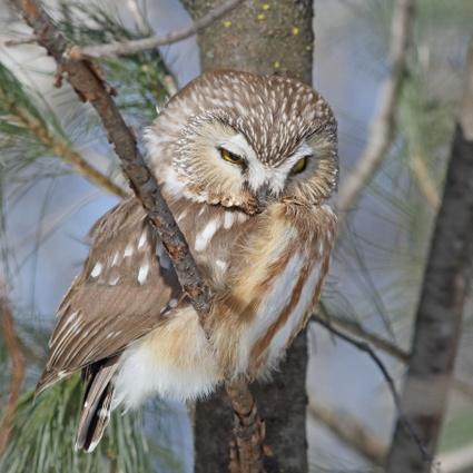 TVR: Écoutez... et regardez les oiseaux - Crédit photo: Alain Charette