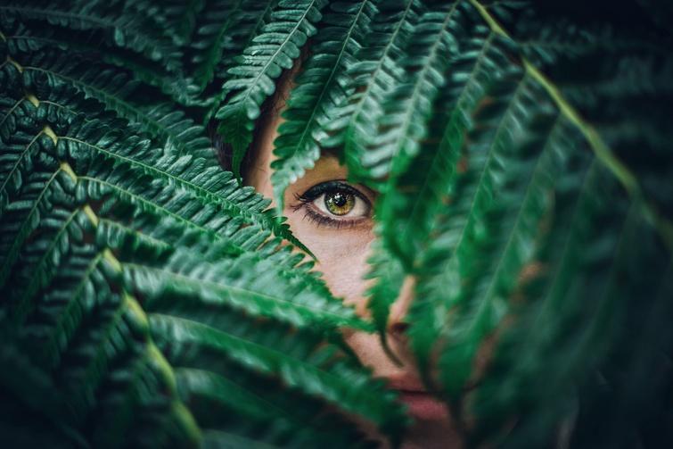 TVR: La route des plantes aromatiques et médicinales - Crédit photo: Quentin Lagache