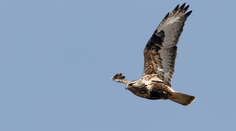 TVR: Soyez aux oiseaux - Crédit photo: Alain Daigle