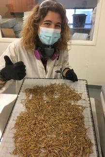 Viens en apprendre davantage sur les insectes comestibles!
