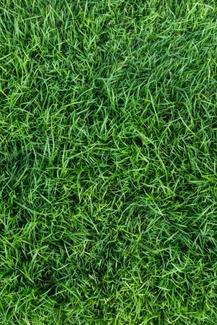 Visioconférence: Pour une pelouse vraiment écologique