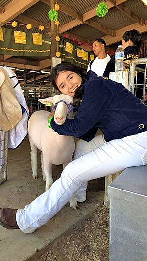 It is with heavy hearts that we share this message with you today. On Saturday, three of our students were involved in a quad accident.  Unfortunately, one of them, Leslie Avila, passed away Sunday morning.  Leslie was a member of our Ag. Academy, FFA Leadership Team, and showed sheep at the Merced County Fair. She was kind, hard working, and loved by her FFA and Ag. Family.   As we navigate this heartbreaking situation, the most important thing we can do is to be supportive, talk to each other, express our feelings, and ask for help when needed.   For this reason, LGHS has set up for counselors to be available for staff and students.  Today, we will have a counselor available at Planada Elementary and at LGHS for student support.  Mrs. Campos will be available at LGHS Tuesday-Thursday for any students that would like to talk.  We invite all students to come in to write letters and cards to show support for Leslie, her family, and friends.  Services for Leslie will be held on Thursday and Friday. Along with her parents, the Ag. Teachers would like you to wear FFA Uniform or FFA Apparel. If you don't have FFA dress please wear pink or yellow.   The viewing will be held Thursday evening from 5:00-8:00pm at Templo La Hermosa (545 Kibby Rd., Merced, CA). A rosary will be held on Friday at 12:30pm at the Sacred Heart Catholic Church (9317 Amistad St., Planada, CA) followed by Mass at 2:00pm.    As we grieve together and come to grips with what has occurred, please keep all involved in your thoughts.  Reach out to an Ag. Teacher or Mrs. Campos if needed.   💙💛Ms. Galan, Mrs. Faria, Ms. Azevedo, and Ms. Hernandez