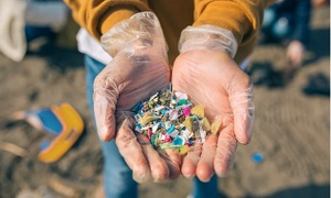 Landmark probe into microplastics found in food and drink to be funded by watchdogs after Mail campaign on microbeads