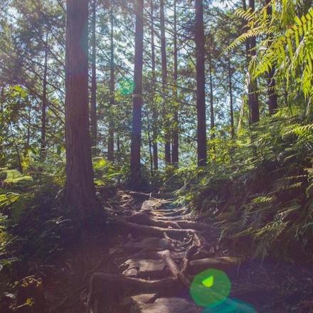 Kumano Kodo Complete self-guided walking (9 days)