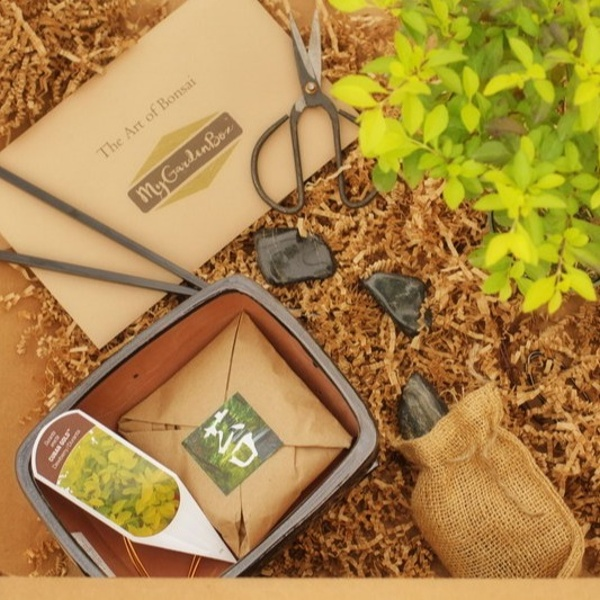 "My DIY Garden - ""The Art of Bonsai"""