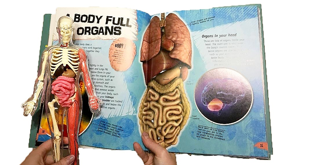 The Human Body Identifying Body Parts Small Online Class For