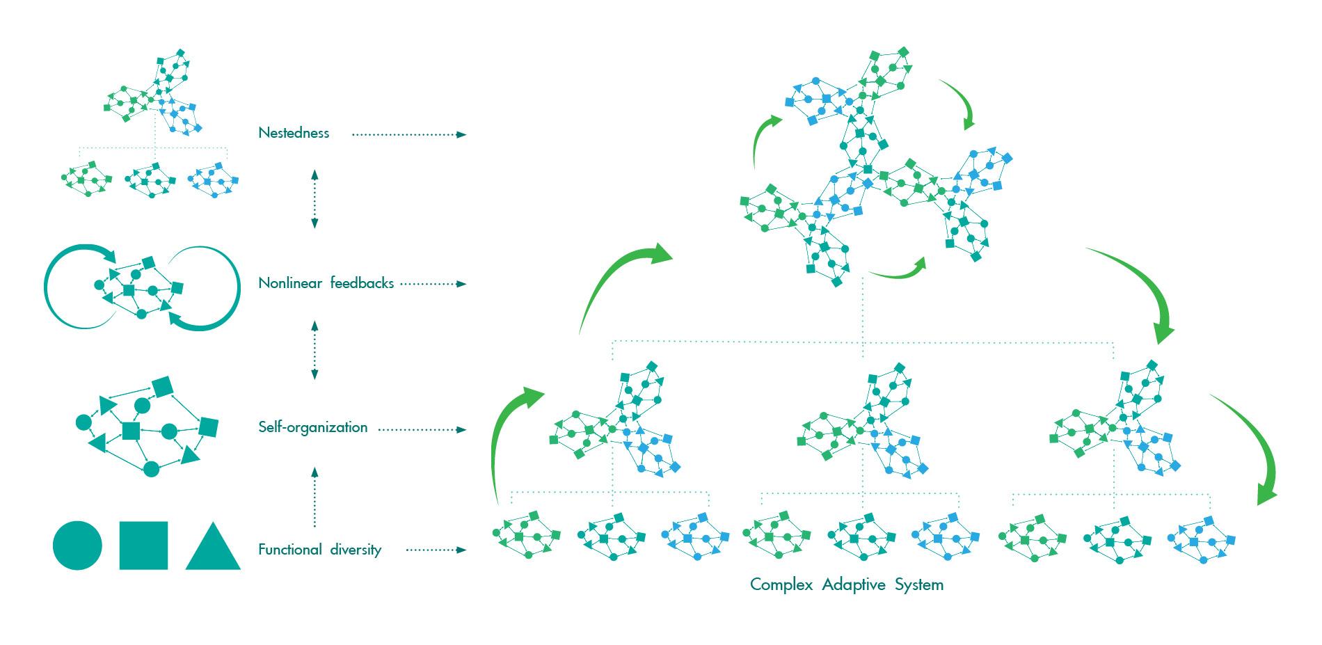 Key Characteristics of Complex Adaptive Systems