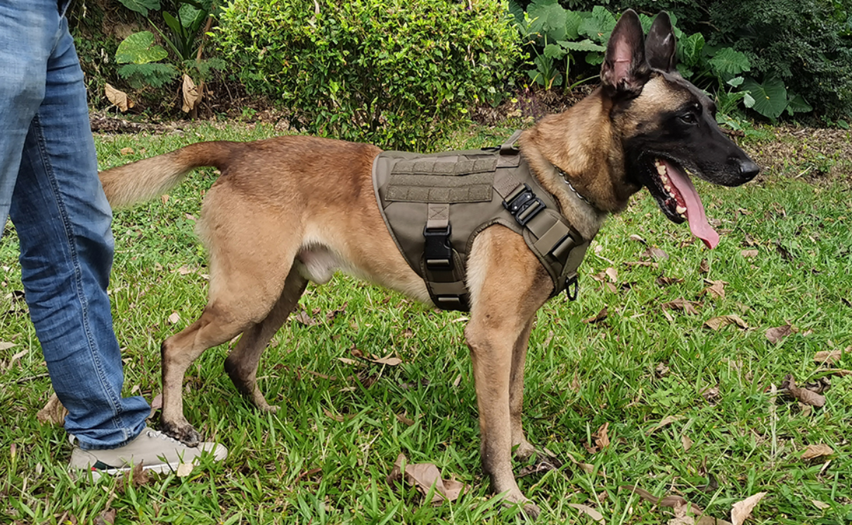 K9 wearing icefang tactical harness