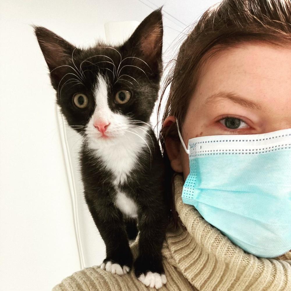 Kattungen Klara räddades från ett liv i hemlöshet i september förra året. Tack vare Djurskyddet Norra Halland har hon nu fått ett för-alltid-hem.  Foto: Djurskyddet Norra Halland