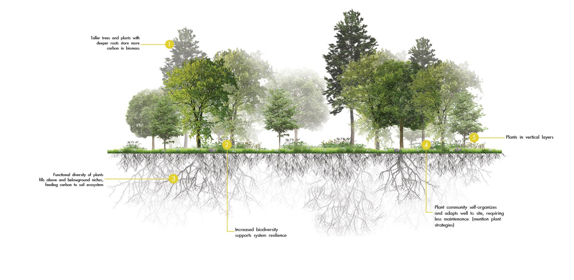 Carbon Sequestering Woodland Landscape