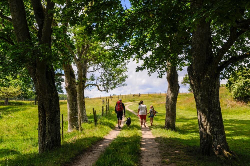 Året runt kan man promenera i det vackra kulturlandskapet. Man kan också följa Östarpsspåret, ett natur- och kulturspår på 1,8 kilometer, som berättar om kulturlandskapet och Östarps historia. Foto: Viveca Ohlsson, Kulturen