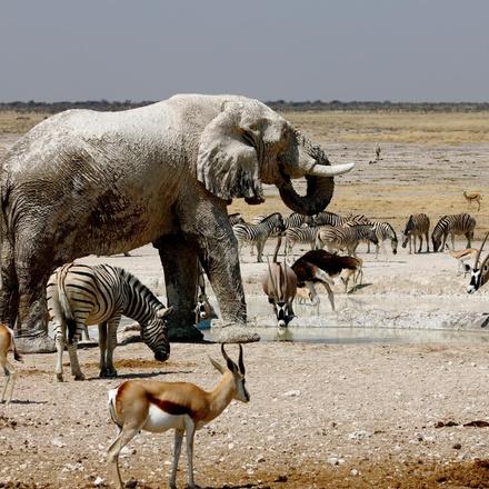 Etosha National Park Experience