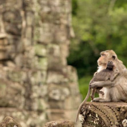 Angkor Discovery by Bicycle