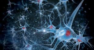 Image De neurones dans le cerveau