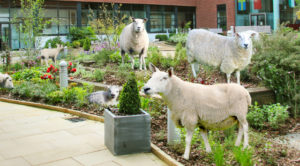 conference-aston-sheep-in-courtyard