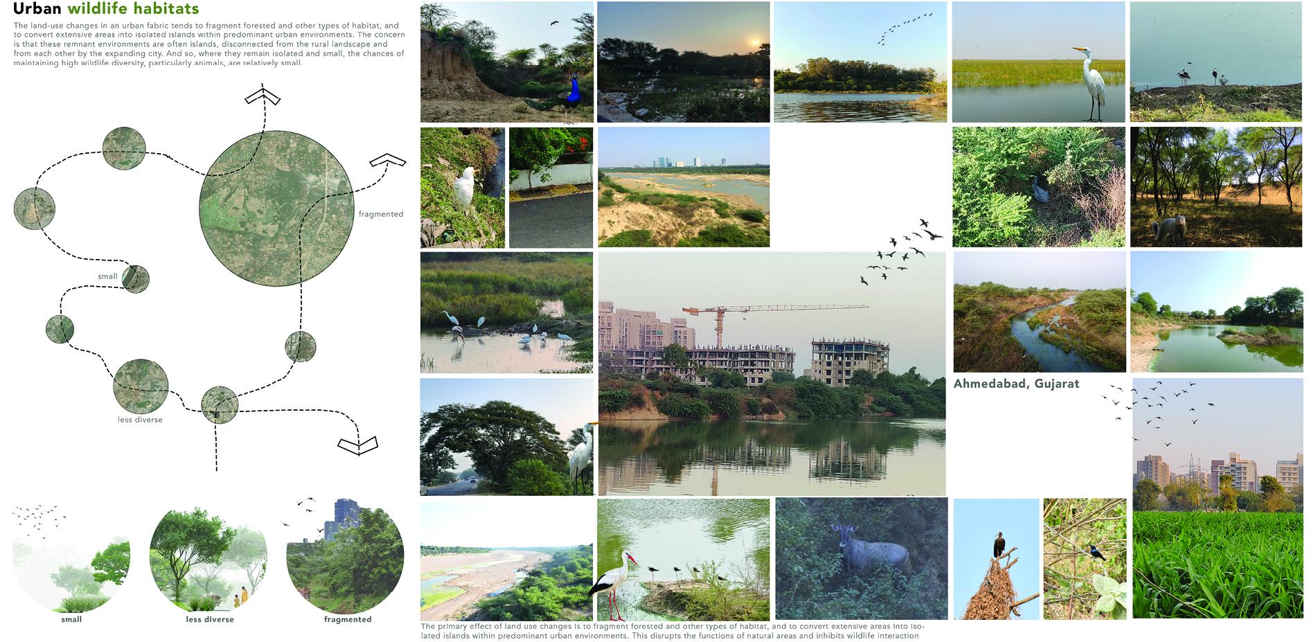 Urban wildlife habitats