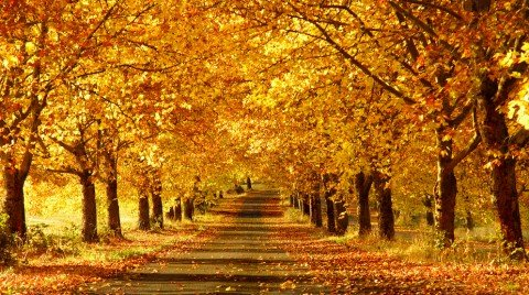 Pathway in the Fall