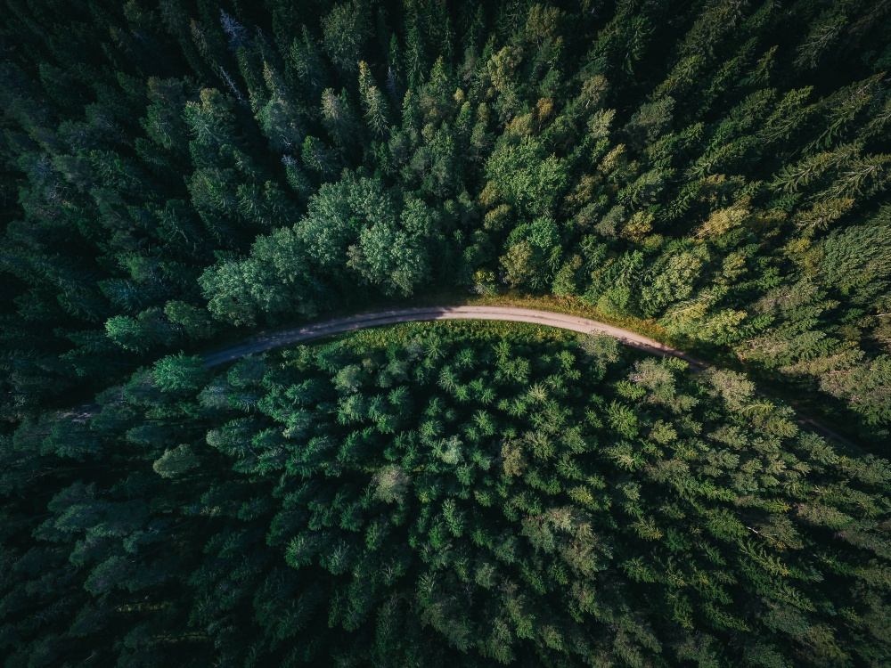 Forests are grown in a sustainable way in Sweden and cover more than half of Sweden's total land area. This makes Sweden one of the most forest rich countries in the world. Photo: Geran de Klerk
