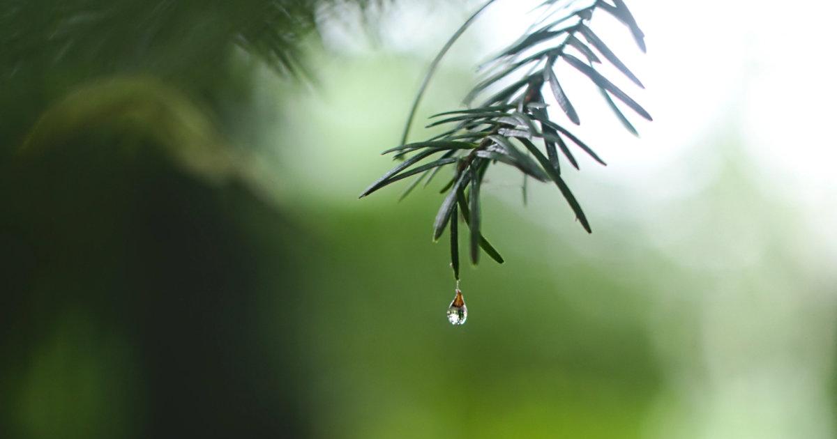 Trees Prevent soil erosion and rainwater runoff