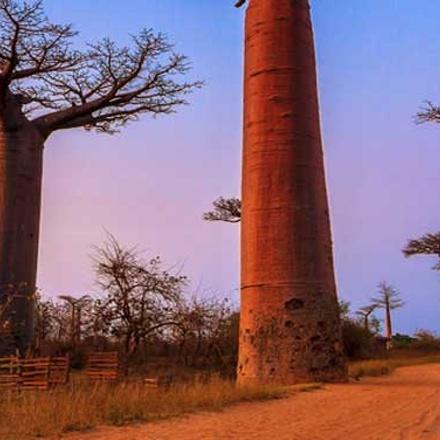 Madagascar in Depth