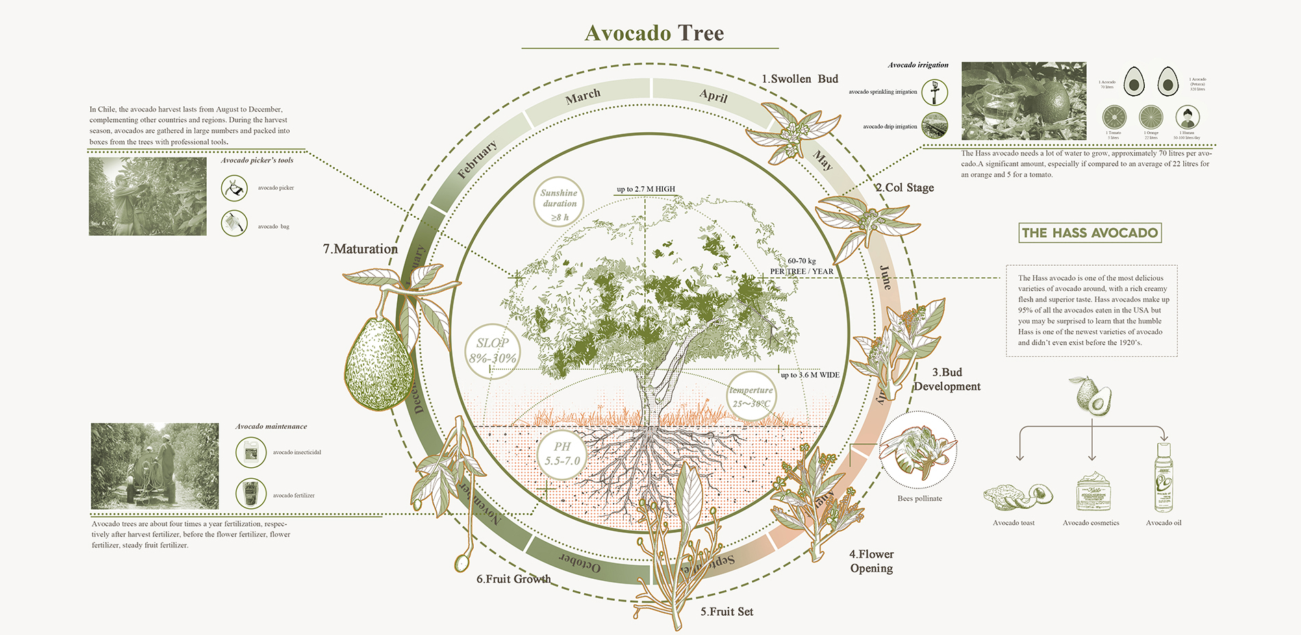The planting cycle of avocado and its products